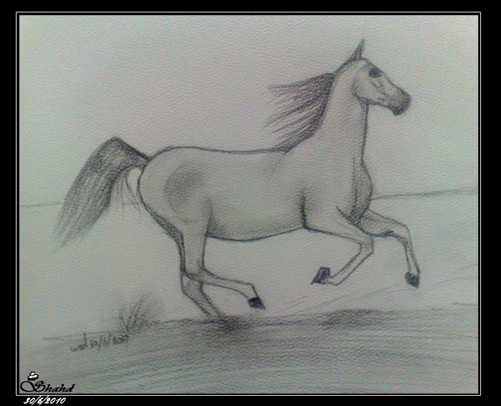 Horse-Drawing.by.Shahd-30.6.2010